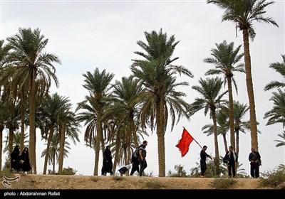 زائرین اربعین حسینی کی سھلہ سے کربلا کی جانب پیادہ روی
