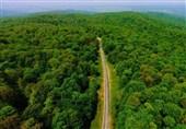 4 هزار هکتار از جنگلها و مراتع کهگیلویه و بویراحمد احیاء میشود