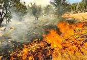 خوزستان| زبانه آتش در جنگلهای زاگرس؛ درختان 200 ساله کوههای حاتم طعمه حریق شدند