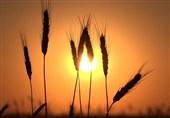 آفتاب لب بام کشاورزی ایران/مسئولان بخش کشاورزی دقیقاً کجا هستند؟
