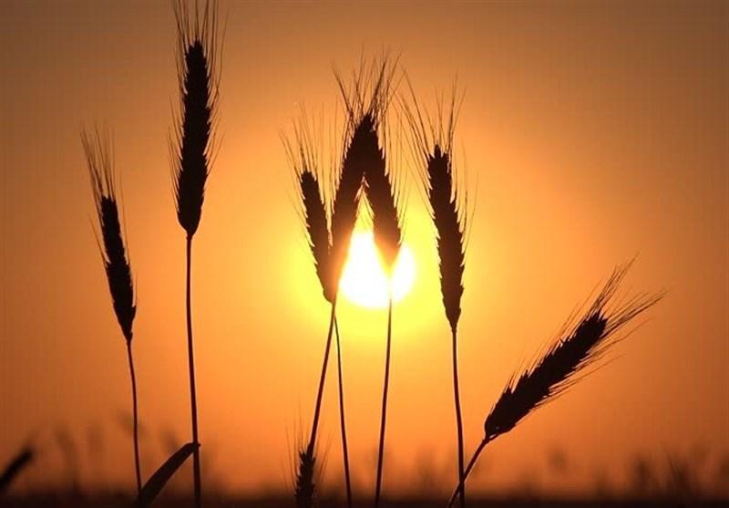 توصیههای هواشناسی به کشاورزان