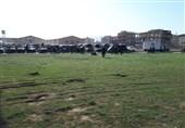 نیروهای یگان ویژه در شهر سرپلذهاب مستقر شدند