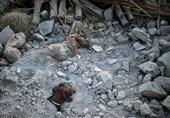 زلزله 800 میلیارد تومان به کشاورزی کرمانشاه خسارت زد