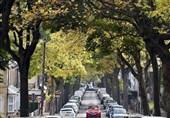 درخت و خیابان