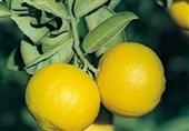 لیمون الحلو