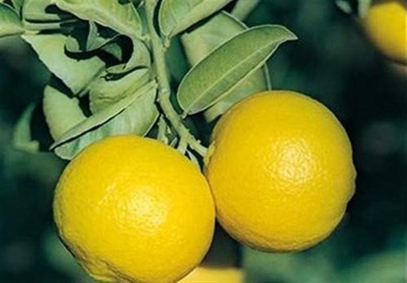 ما هی فوائد اللیمون الحلو؟