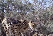 رقابت یک مستند ایرانی با مستندهای حیات وحش دنیا در روز جهانی حیات وحش
