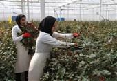 محصولات گلخانهداران شهرستان خوسف بازار ندارد