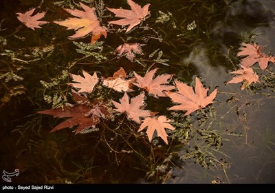 فصل پاییز در کشمیر