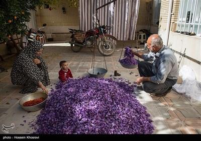 امروز علاوه بر استهبان شهرستانهای سپیدان، اقلید، صفاشهر، بوانات، آباده، مرودشت، فیروزآباد، فسا و شیراز تولید کننده زعفران در استان فارس هستند