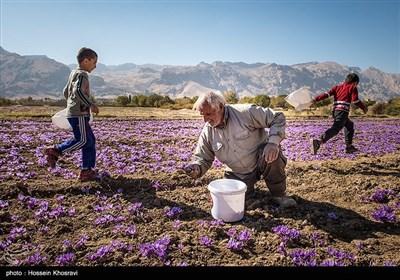 تغییرالگوی کشت و کاشت محصولات کشاورزی با مصرف آب کم، یکی از راهکارهای مهم در سالهای بحران کمآبی در استان فارس محسوب شده و مرهمی بر زخم کهنه خشکسالی در این استان به شمار میرود.