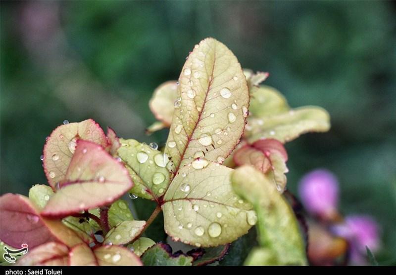 باران خراسان شمالی