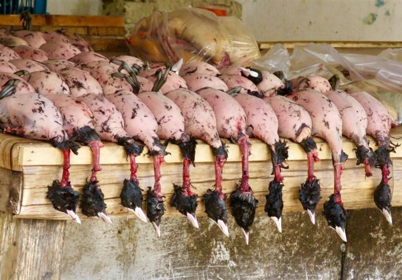اطلاعیه مهم محیط زیست مازندران درباره شکار غیرمجاز پرندگان مهاجر در سال 97