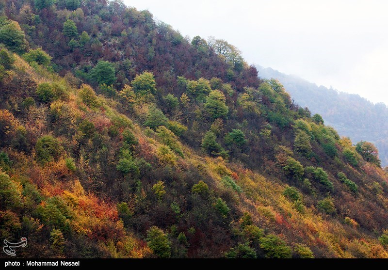 طبیعت پاییزی در گلستان