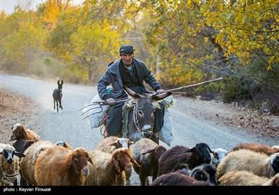 طبیعت پاییزی در کردستان
