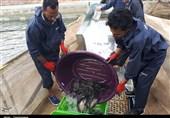 پیش بینی صادرات 550 میلیون دلاری شیلات/ تامین تجهیزات پرورش ماهی در قفس با ارز دولتی