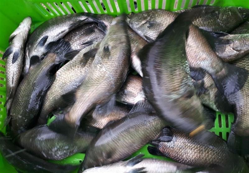 ماهی در قفس