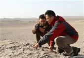 کشف فسیل 200 تخم دایناسور پرنده در چین+تصاویر