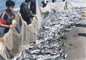 700 تن ماهی استخوانی در مازندران صید شد