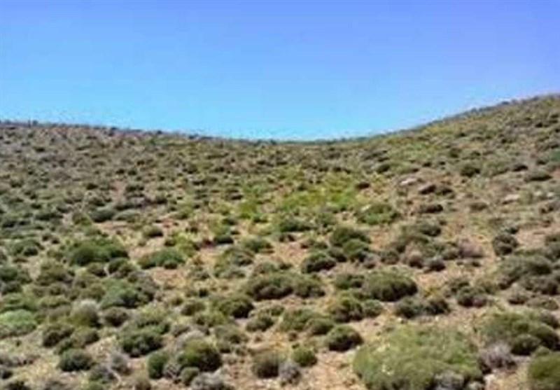 پوششهای گیاهی دشت قزوین در معرض نابودی قرار دارد