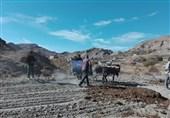 99 درصد مطالبات گندمکاران استان خراسان جنوبی پرداخت شد