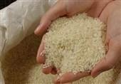 برنج ایرانی روی دست شالیکاران ماند