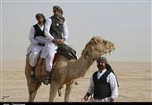 حضور شترهای سرگردان در استان البرز سبب بیابان شدن اراضی میشود