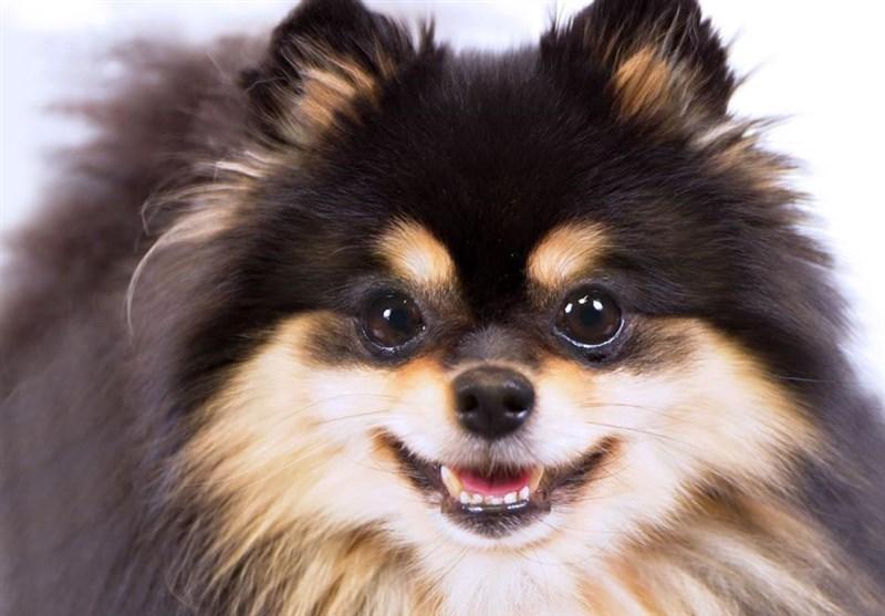 واردات پوست رنگ شده سگهای چینی به تهران
