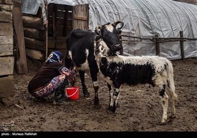 سیمزار دشتی 50 ساله هر روز صبح زود قبل از اینکه شوهرش دامها را به چرا ببرد شیر گاوها را میدوشد تا با آن لبنیات محلی مانند ماست، دوغ، پنیرو کره تهیه کند او بخشی از این فراورده ها را برای مصرف روزانه خانواده کنار میگذارد و مازاد مصرف را در بازارهای محلی به فروش میرساند تا کمک حال اقتصاد خانواده باشد