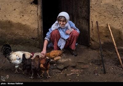 گلقیس خندانی 78 ساله مقداری دانه داخل ظرف ریخته و با دستانش به مرغ و خروسهایش دانه میدهد.او این کار را هرروز تکرار میکند