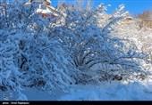 سازمان هواشناسی: شرق کشور 7 درجه سرد میشود