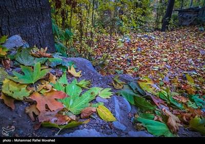 طبیعت پاییزی قم