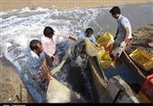 استاندار گلستان: چرخه کامل میگو در شهرستان گمیشان تکمیل میشود