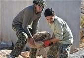 گروههای جهادی قزوین ساماندهی شدند