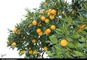 «معجزه آبخیزداری»| باغ قرآنی؛ بهترین راه مقابله با چالش های زیست محیطی/اثرات زیبانبار کاشت درختان غیرمثمر مضر چیست؟