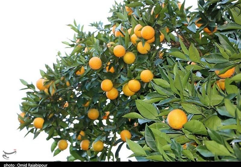 «معجزه آبخیزداری»  باغ قرآنی؛ بهترین راه مقابله با چالش های زیست محیطی/اثرات زیبانبار کاشت درختان غیرمثمر مضر چیست؟