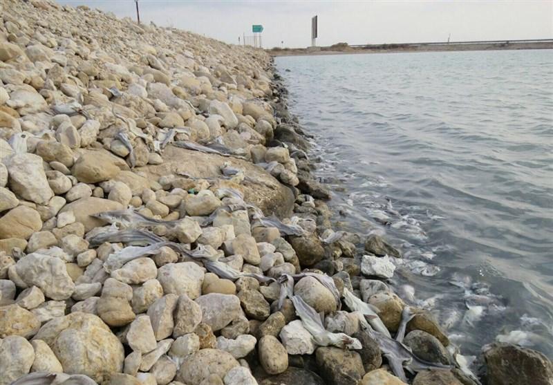 200 قطعه بچه کوسه ماهی در ساحل بوشهر تلف شدند+تصاویر
