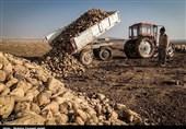 فارس  بذر چغندر قند پاییزه تامین شد؛ نیازی به واردات شکر خام نخواهیم داشت