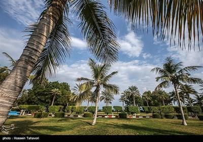 بالصور .. فصل الخریف فی جزیرة کیش
