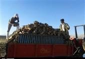 رئیس کمیسیون قضایی مجلس از بیتوجهی به چغندرکاران انتقاد کرد؛ تذکر به وزیر جهاد کشاورزی