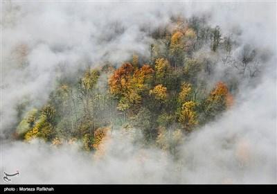 جلوه ای از پاییز در جنگل پوشیده از مه در ارتفاعات تالش استان گیلان