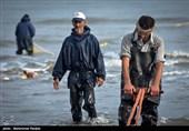 صیادان گیلانی 675 تن انواع ماهیان استخوانی صید کردند