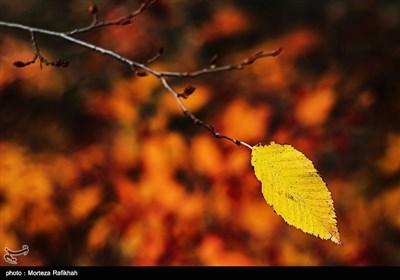 ایران کے صوبہ گیلان میں موسم خزاں کے آخری ایام