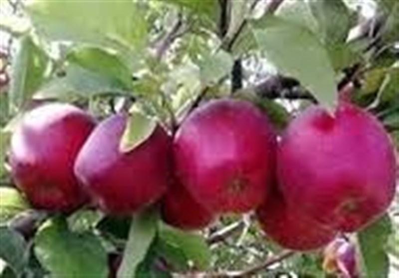 120 میلیون تُن انواع محصولات کشاورزی در سراسر کشور تولید میشود