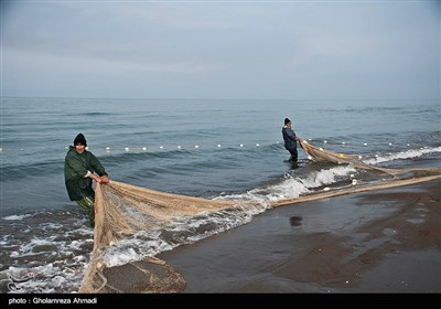 صید پره یکی از قدیمیترین روشهای صید ماهیان استخوانی از جمله ماهی سفید در حاشیه جنوبی دریای خزر (استان گیلان و مازندران) است که قدمتی چند صد ساله دارد.