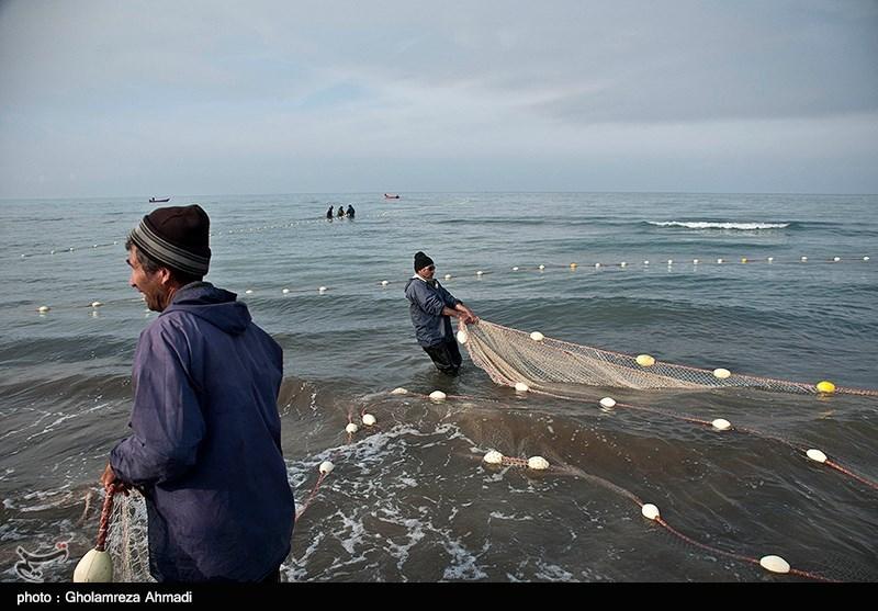 گیلان| صید ماهیان استخوانی در دریای خزر 30 درصد کاهش یافت