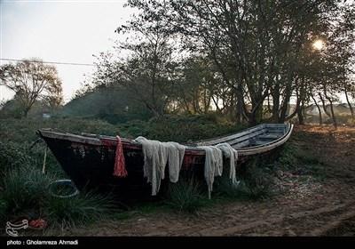 صید پره در میانکاله بهشهر