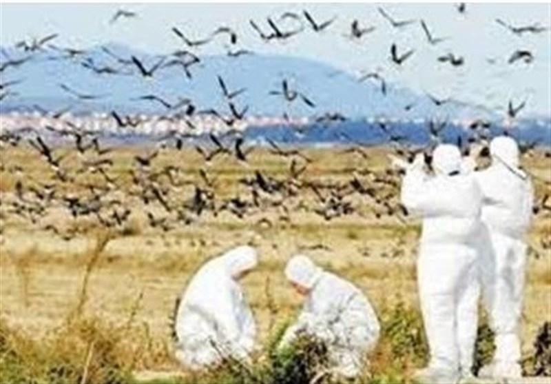 پزشکی| آنفلوآنزای پرندگان H5N6 ابتلای انسانی در ایران نداشته است +جزئیات