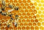 زنبور عسل، شگفتی ریاضیات