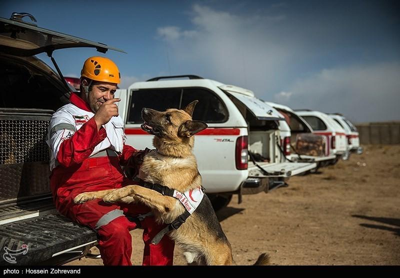 Dogs For Rescue Miami